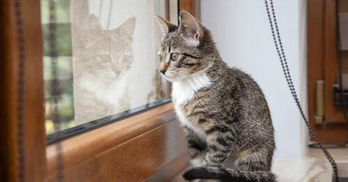 Les chats et les fenêtres, attention !