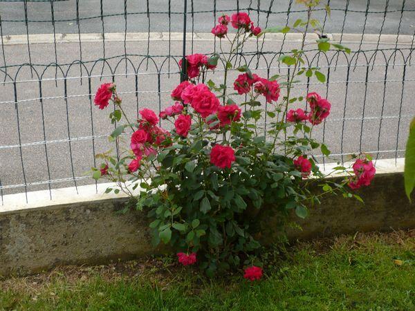 Jardin-juin2012-06.jpg