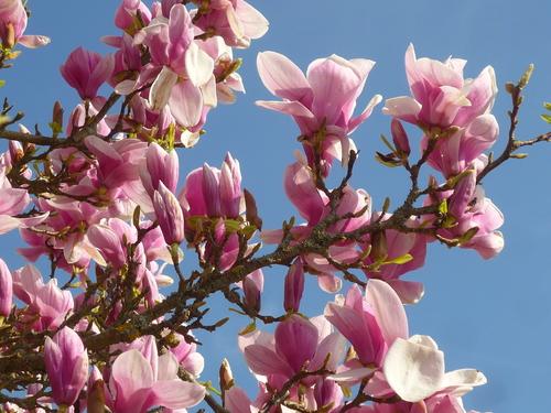 Rosa fête le printemps