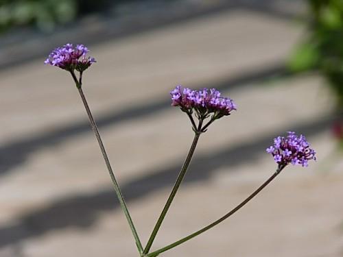 jardingaremetz020