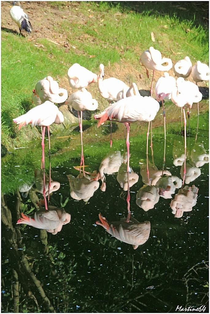 Oiseaux 02 Famants roses 7397