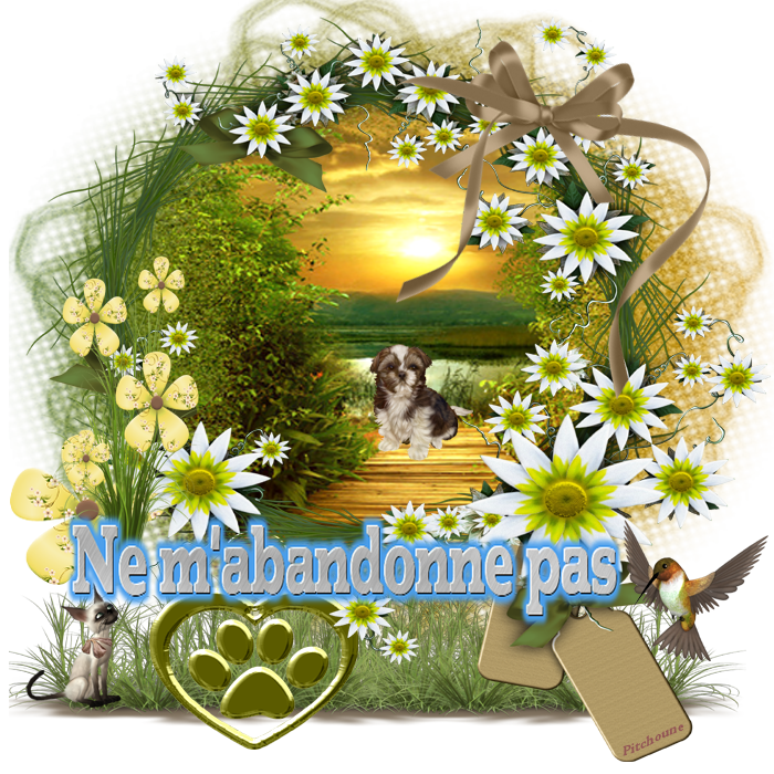 Protection Animale