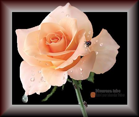 Tube fleurs 2897