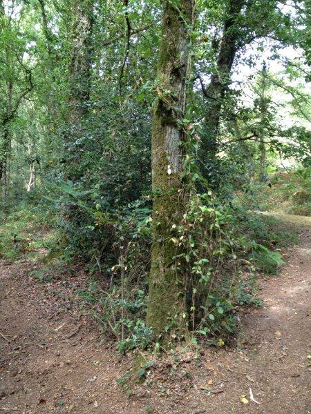 L'arbre à chouettes