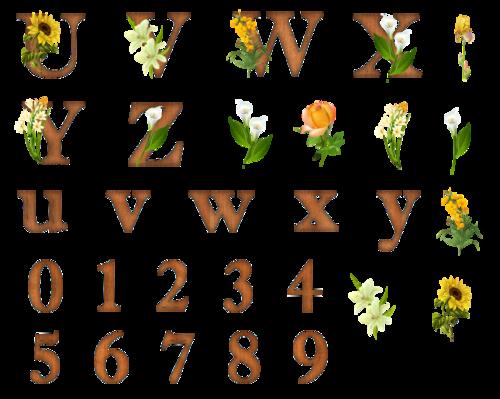 alphabet bois fleurs