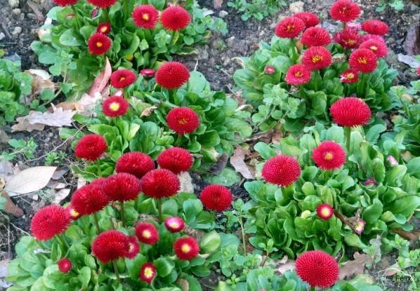 t03 - Fleurs