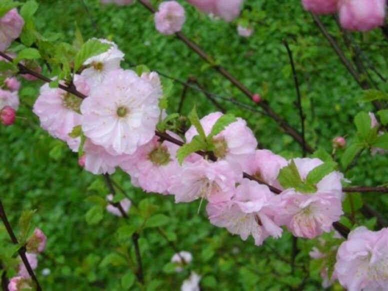 envie de printemps ......
