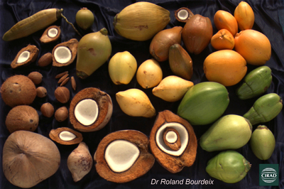 File:Diversite des fruits.jpg