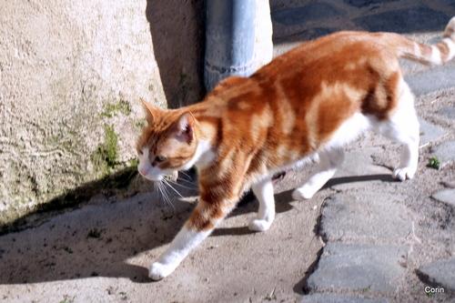 Le chat du voisin !