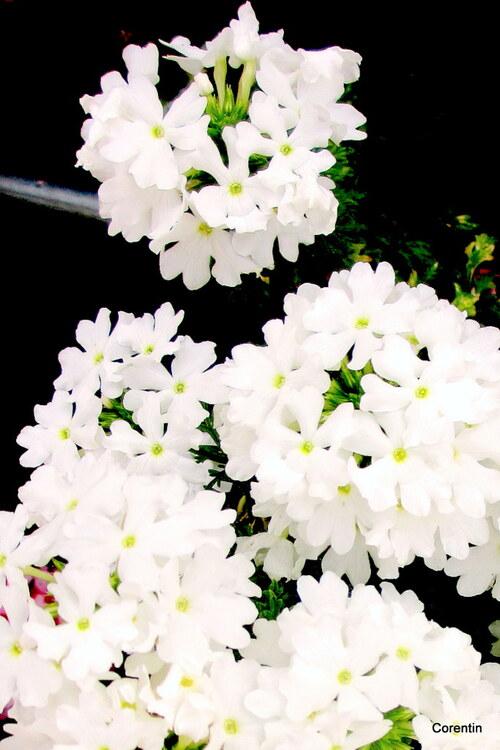 Des fleurs : du bleu, du blanc et du rose !
