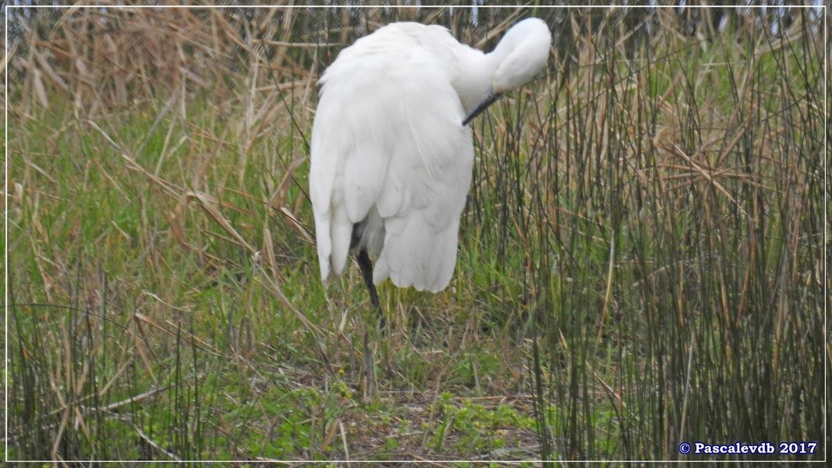 Réserve ornitho du Teich - Mars 2017 - 5/15
