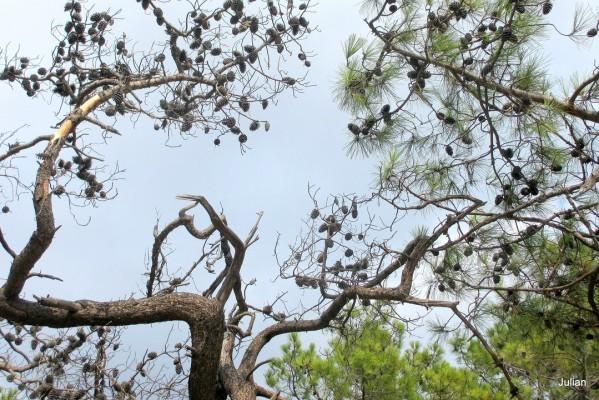 w03 - Branches et ciel