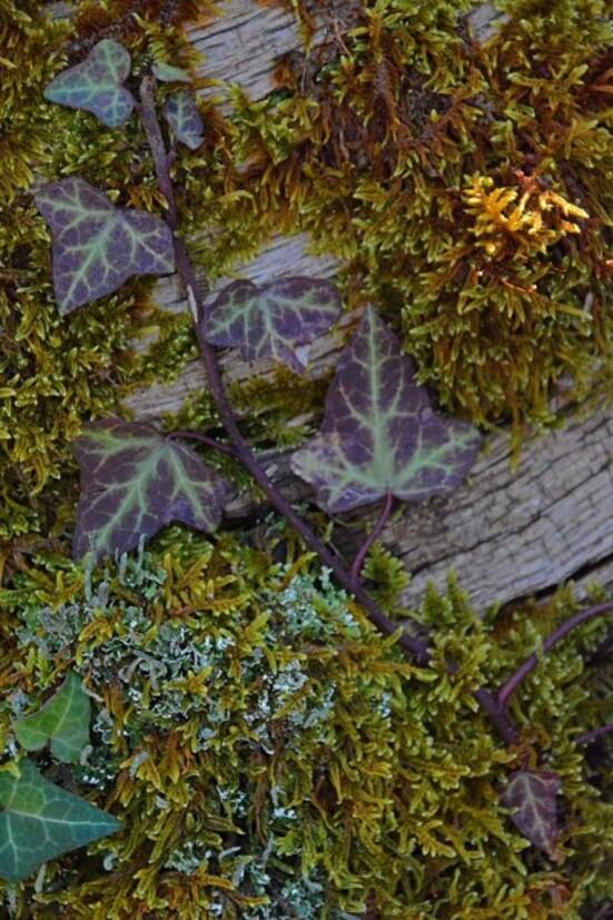 Feuilles-herbes--fougeres-4-9510_modifie-1.jpg