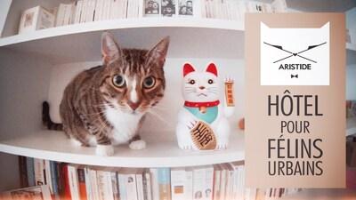 Hôtels pour chats