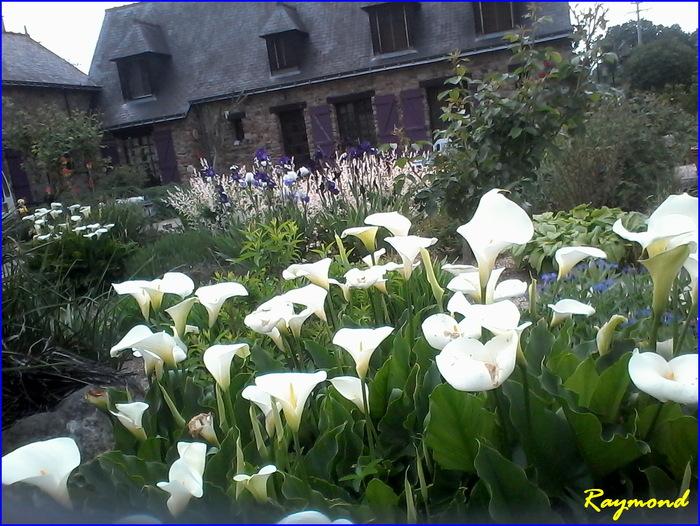 Floraisons.1