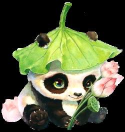 Des pandas tout mimis !