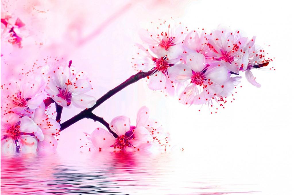 Au Printemps Des Cerisiers En Fleurs Et Des Papillons Cosmetic
