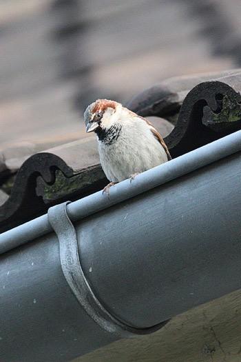 oiseau-jardin-30032012-03