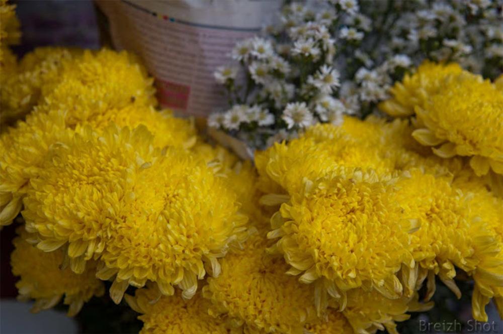 marché de Sukhothai - fleurs