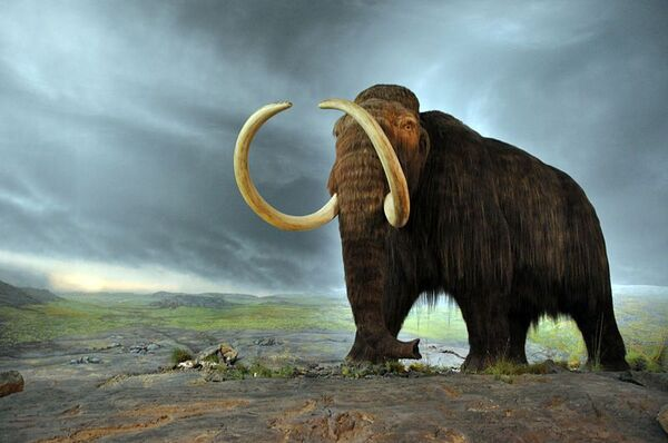 La disparition des mammouths, il y a 11.000 ans, serait due, selon cette nouvelle hypothèse, à des périodes de réchauffement rapides survenues en plein climat glaciaire. © Flying Puffin, Wikimedia Commons, CC by-sa 2.0