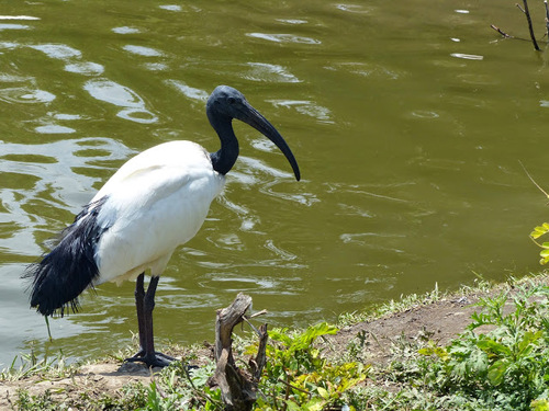 de beaux oiseaux endémiques