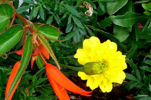 Jolies fleurs de saison