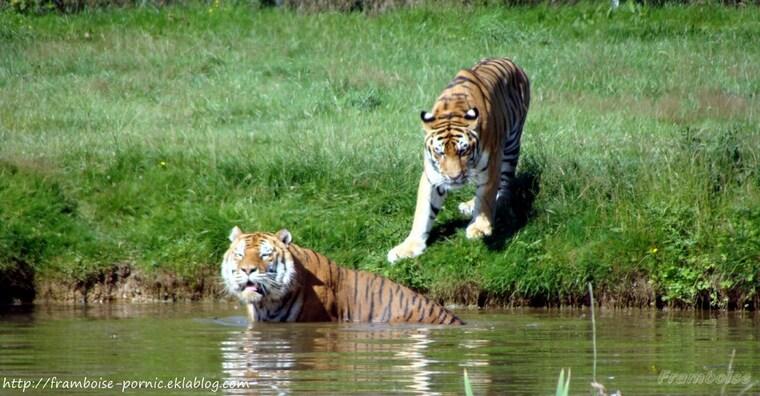 Planète sauvage Parc animalier