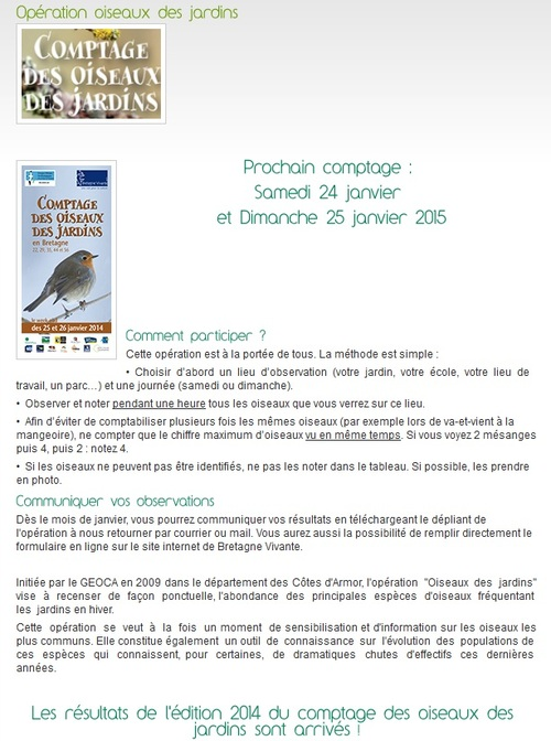 Sortie ornithologique à SARZEAU