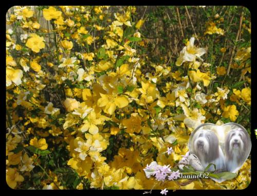 ♥ le jardin d' Athos & Cheyenne (fin avril) ♥