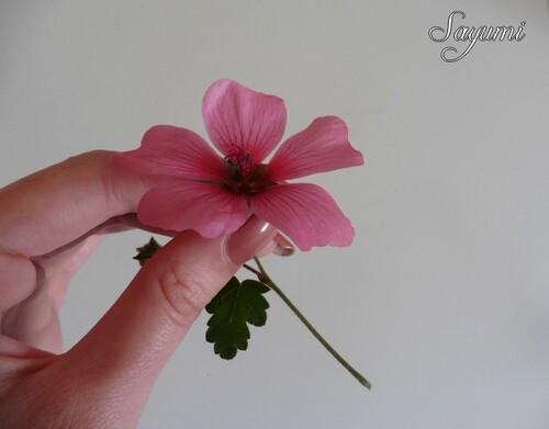 Adopt' - Rose Cashemire