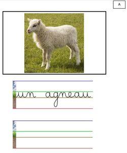 vocabulaire: les animaux