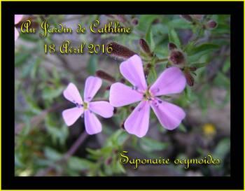 Jardiner avec la Lune du 1er au 10 Mai