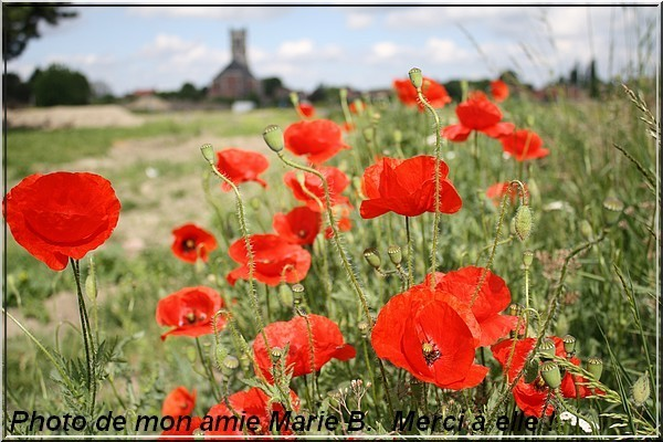 COQUELICOTS MARIE B