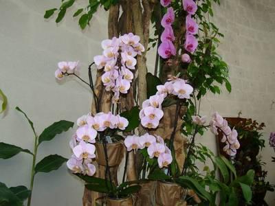 Blog de beaulieu : Beaulieu ,son histoire au travers des siècles, Orchidées