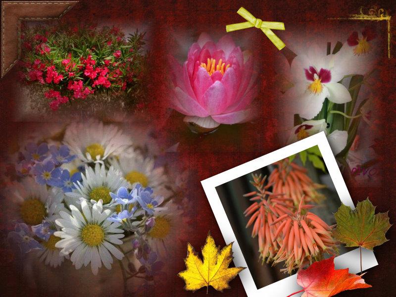 Une petite composition des fleurs de mon jardin