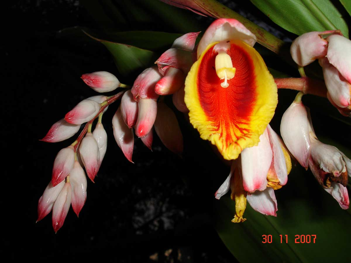Fleurs De Madagascar Madagascar