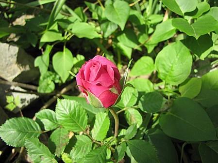 fleurs 1169