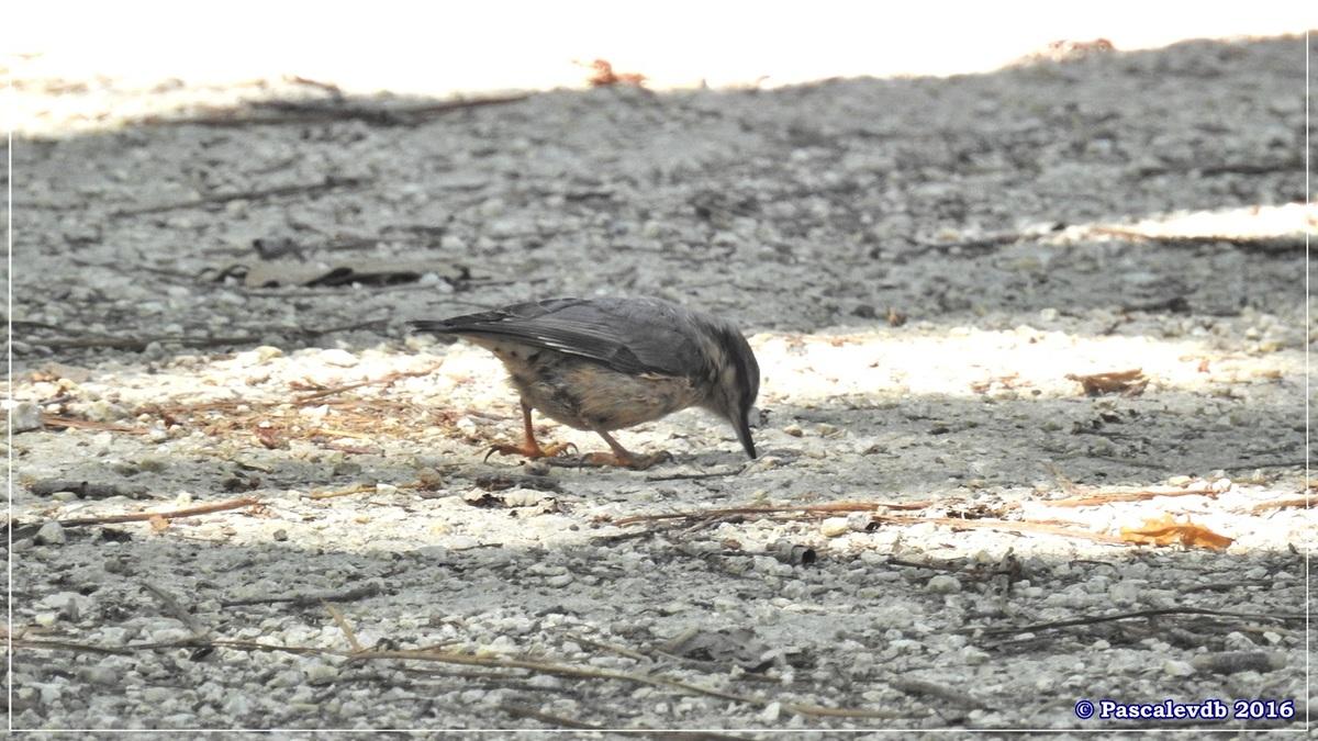 Réserve ornitho du Teich - Juin 2016 - 1/12