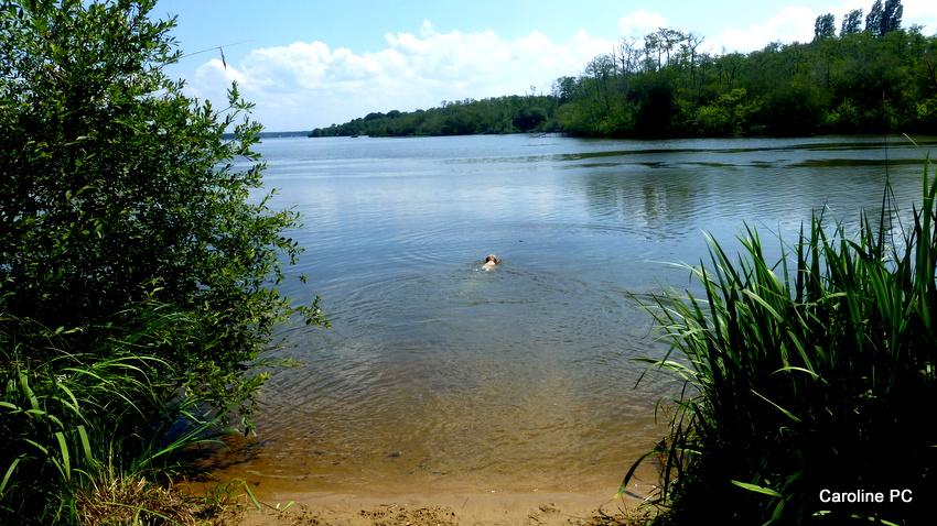 Autour du lac de Mimizan
