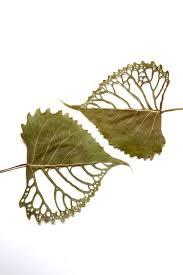 Des feuilles support d'art ...