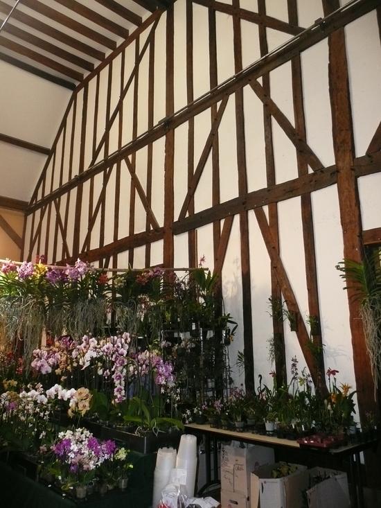 2013-Expo orchid Pont sainte Marie 070