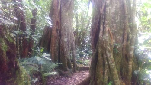La Forêt de Bois Accueil