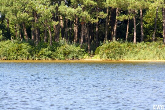 Lacanau lac : les îles