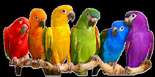"""Résultat de recherche d'images pour """"oiseaux exotiques"""""""