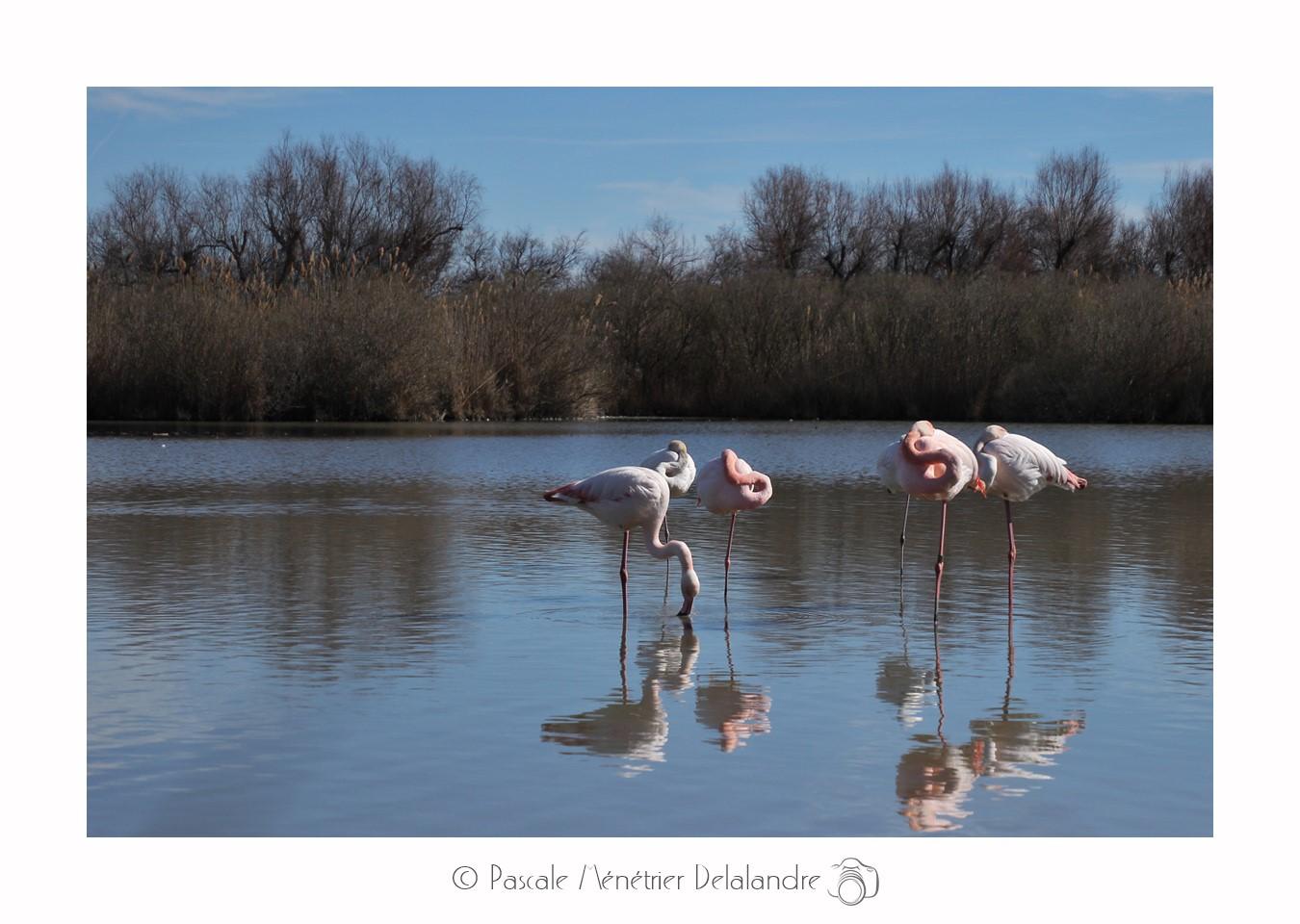 Balade au Parc Ornithologique du Pont de Gau (Camargue - Bouches du Rhône)