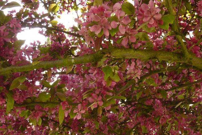 Le printemps est enfin arrivé