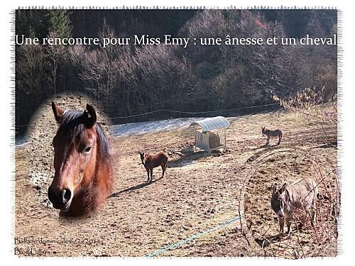 2 ane et cheval pour emy