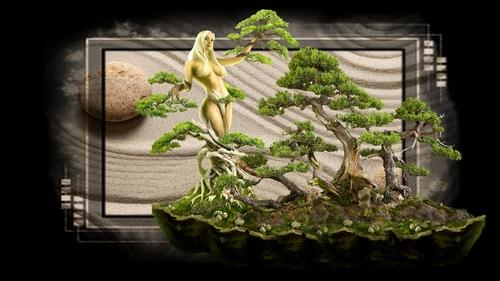 fond femme bonsai