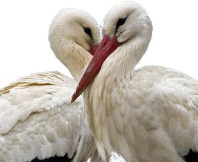 Blog de roselyne :Humanité, Nature,  Amour et lumière, Par amour il l'a fait (pps)