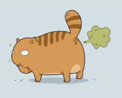 Les types psychologiques du chat